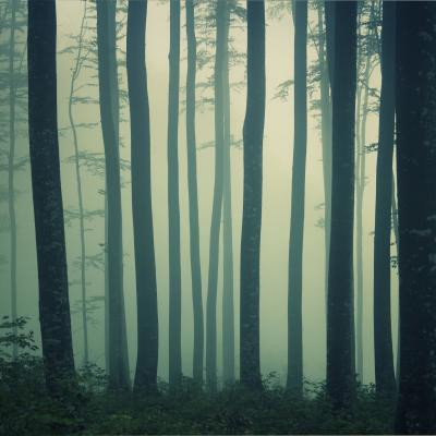 Mystic nebligen Buchenwald