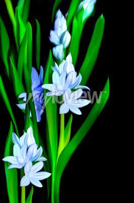 Fototapete Lazurowe Kwiaty