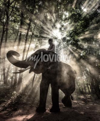 Bild Mahout in der Provinz Surin Thailand Elefanten