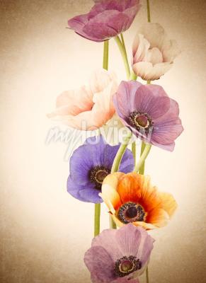 Fototapete Frische bunte Mohnblumen Blumen