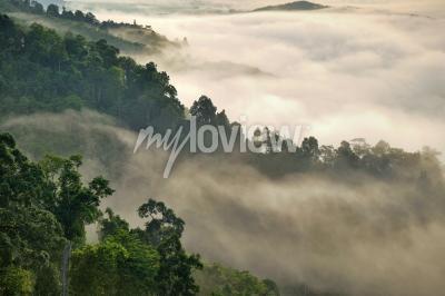 Fototapete Nebelhafter Nebel auf dem Berg im tropischen Wald