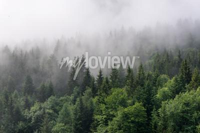Fototapete Evergreen Forest Übersicht