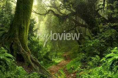 Fototapete Tropischer Regenwald