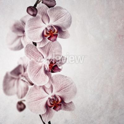 Fototapete Eine zarte rosa Orchidee auf verblasstem Vintage-Stil Hintergrund