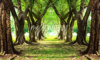Fototapete Zauberwald grün