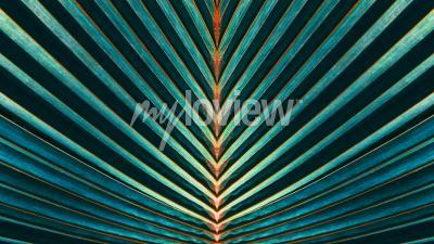 Fototapete Gestreift aus Palmblättern