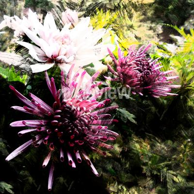 Fototapete Stylized bouquet of chrysanthemums on grunge striped and stained background