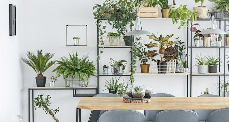Suchen Sie nach einer Idee für angesagte Wände? Wir wissen, was Ihnen gefallen wird!