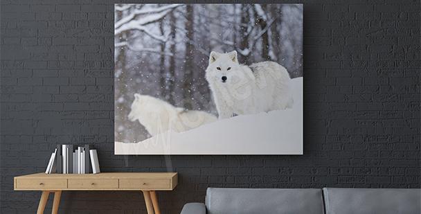 Bild Arktische Tiere