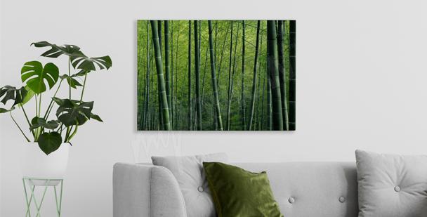 Bild Bambus im Wald