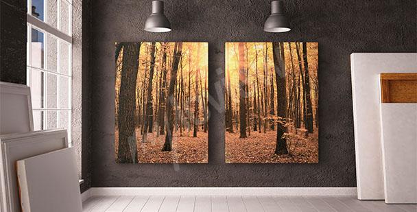 Bild Bäume im Wald