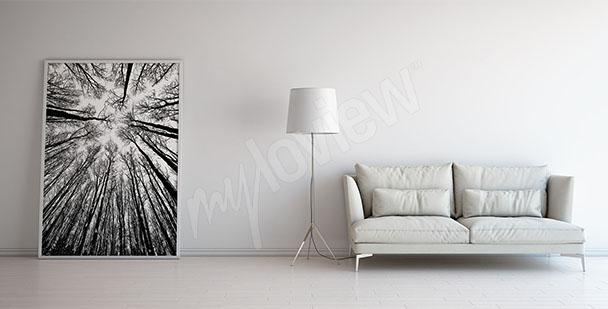 Bild Bäume schwarz-weiß