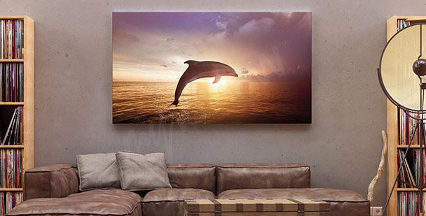 Bild Delfin und Sonnenuntergang