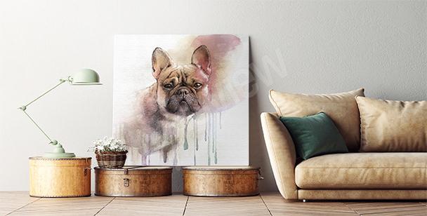 Bild französische Bulldogge