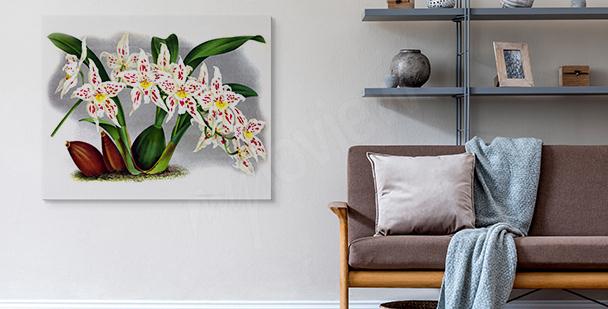 Bild rosa Orchidee