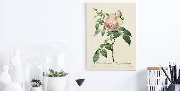Bild Rosen auf weißem Hintergrund
