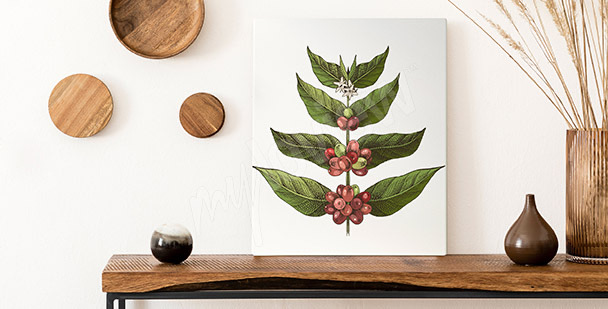 Bild Kaffeebaumblätter