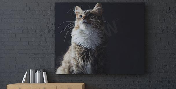 Bild Katze im schwarzen Hintergrund