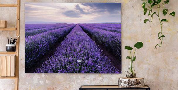 Bild Lavendel auf dem Feld