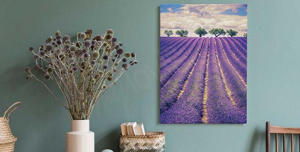 Bild Lavendel und Bäume