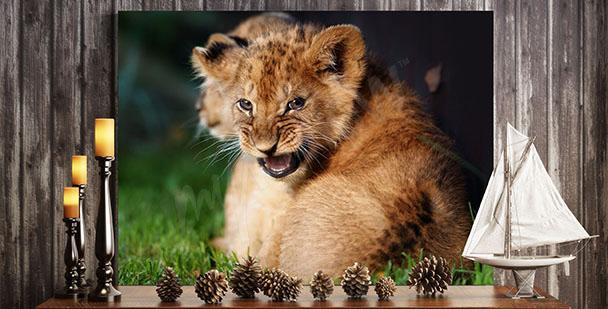 Bild Löwenjunge