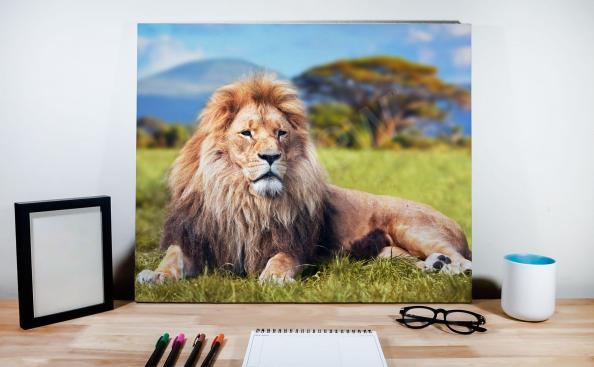Bild Löwenmännchen vor dem Hintergrund einer Landschaft