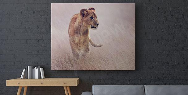 Bild Löwin im Gras