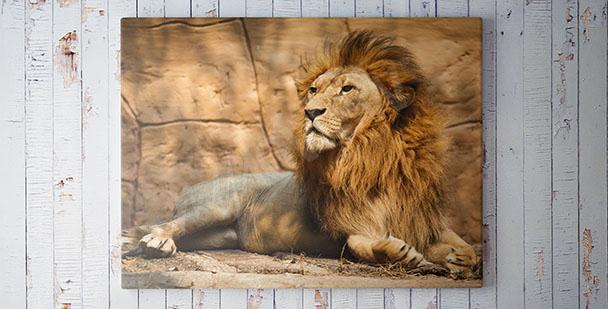 Bild mit einem Löwen fürs Wohnzimmer
