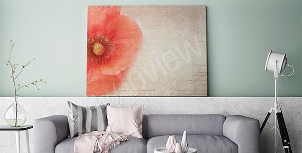 Bild mit einer Mohnblume