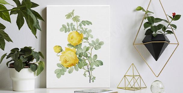 Bild weiße Rosablumen