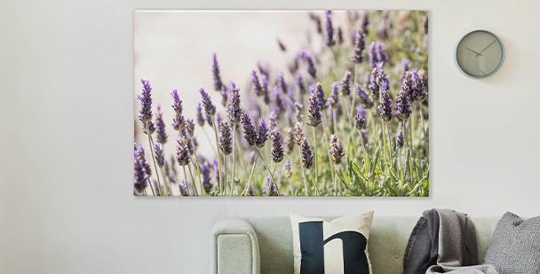 Bild mit Lavendel in Vasen