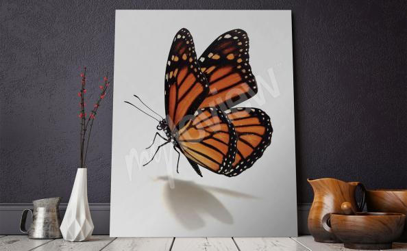 Bild mit Schmetterling - Minimalismus