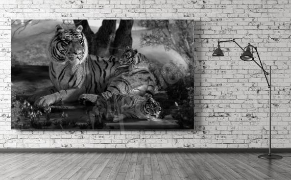 Bild mit Tigern in Schwarz-Weiß