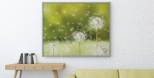 Bild Pusteblumen auf einer Wiese