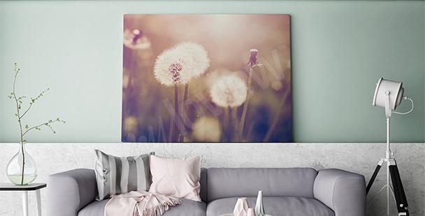 Bild Pusteblumen für Wohnzimmer