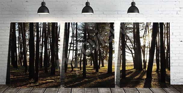 Bild Triptychon mit Bäumen