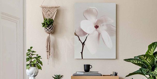 Bild weiße Magnolie