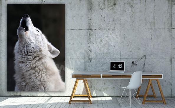 Bild weißer Wolf