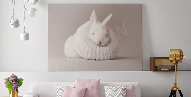 Bild weißes Kaninchen fürs Wohnzimmer