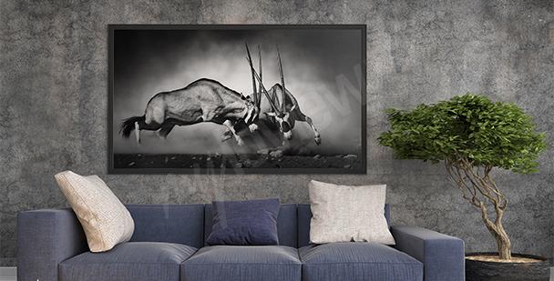 Bild Wildtiere