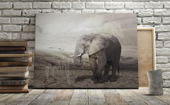 Elefant Bild schwarz-weiss