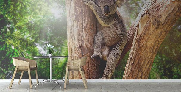 Fototapete Australien Koala