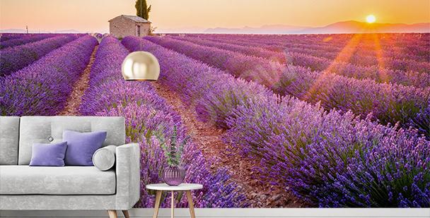 Fototapete blühender Lavendel