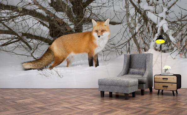 Fototapete Fuchs im Schnee