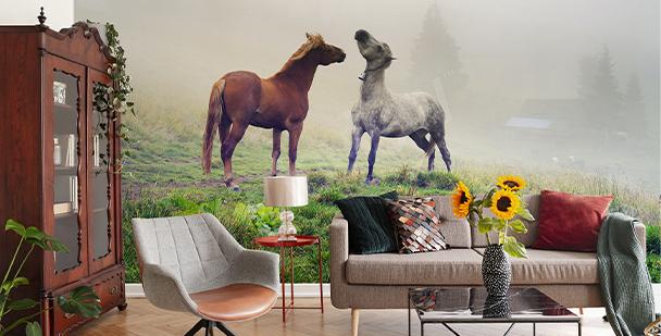 Fototapete Pferde in Schwarz-Weiß