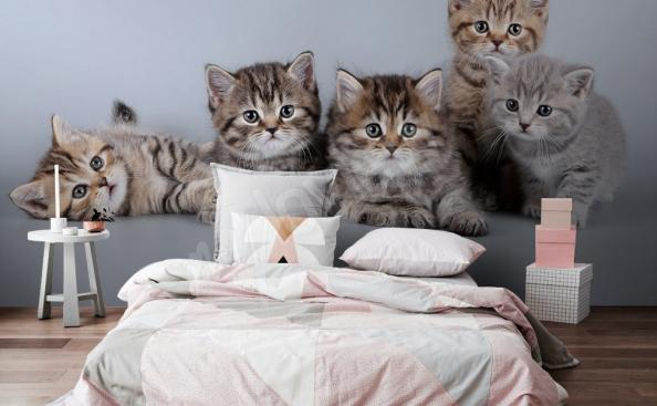 Fototapete Katzen furs Schlafzimmer