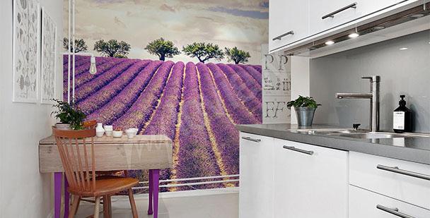 Fototapete Lavendel für die Küche
