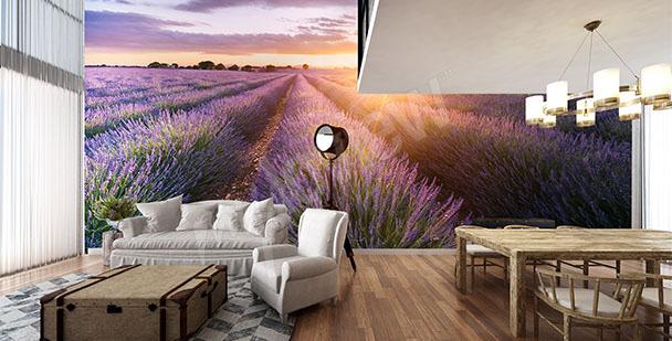Fototapete Lavendel in der Provence