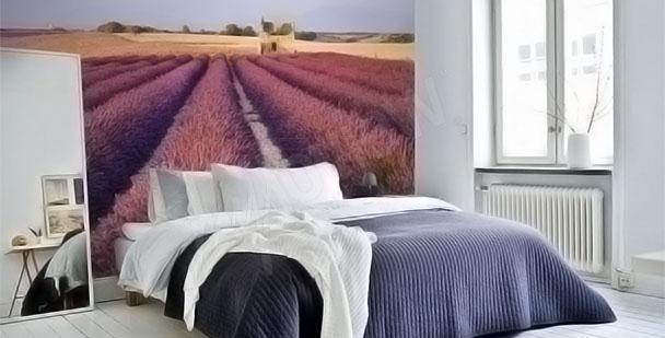 Fototapete Lavendelwiese