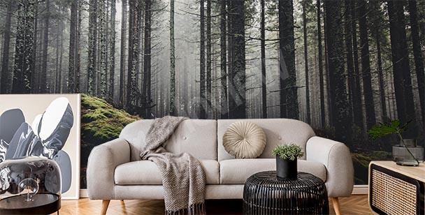 Fototapete nebliger Wald